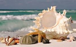 seashells and ocean