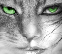 shifter cat eyes