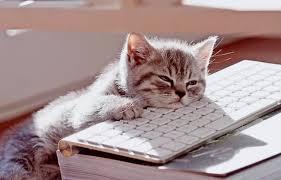 bored kitten