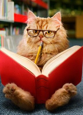 cat-and-book