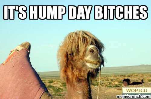 hump-day-bitches