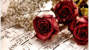 roses-and-music